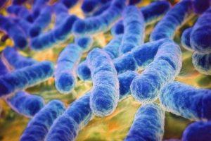 batteri intestino
