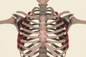muscolo dentato anteriore